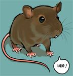 Ratty's Photo
